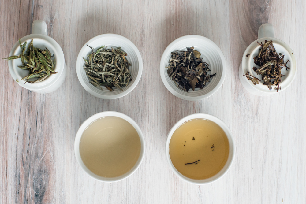 Caffeine in White Tea - comparing silver needle and bai mu dan