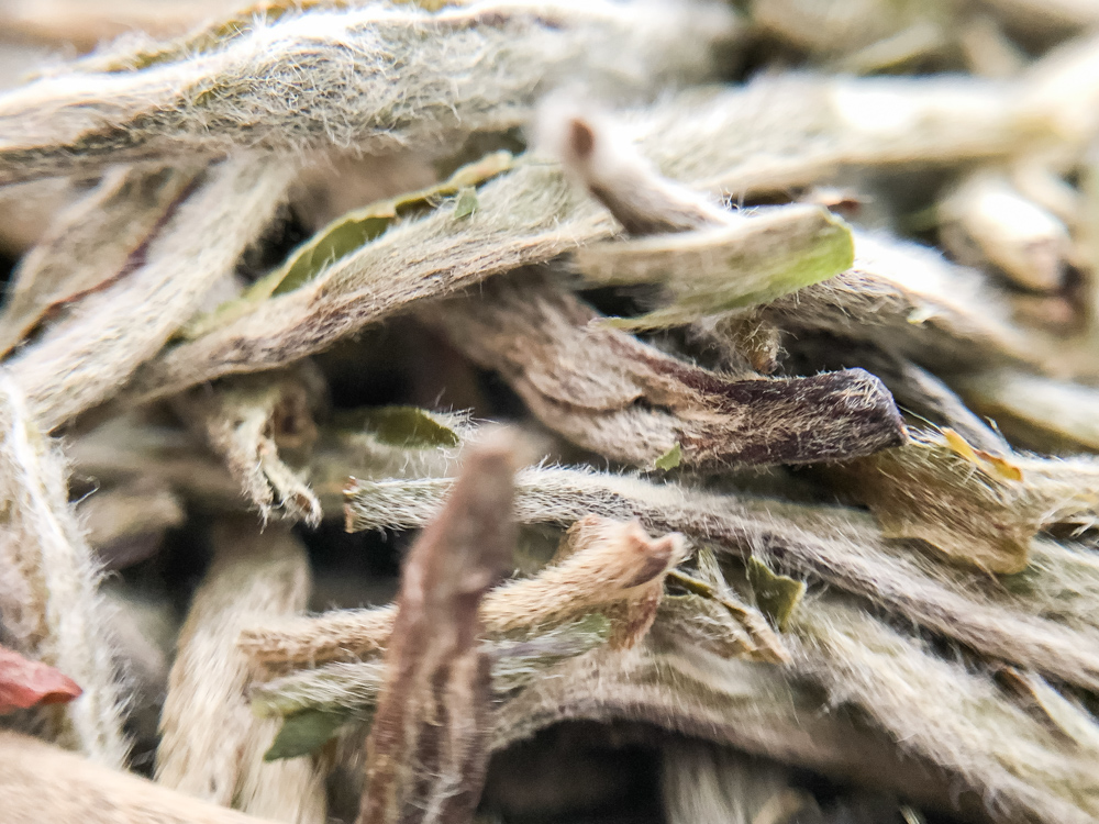 Zoomed hairy view of white silver needle tea